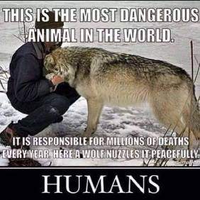 Animal abuse - Dangerous most in the world